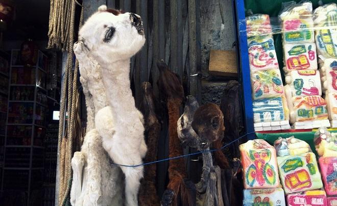 llama fetus witches market la paz